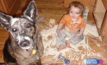 Animalele de companie sunt cei mai buni tovarăși de joacă ai copiilor